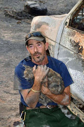 cat survives wildfire