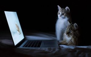 Cats watching movie
